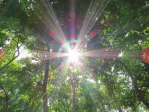 The sun shines through the leaves. Stock Photo