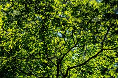 The sun shines through leaves Stock Image
