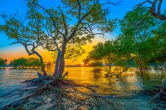 sunset over mangrove forest during high tide at Klong Mudong Phuket royalty free stock photos