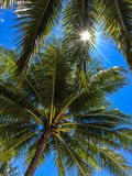 The sun shines through palm tree leaves. Thailand, islend Koh Chang, October 2014 stock photos