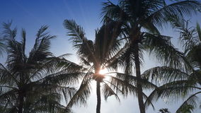 The sun shines through palm tree leaves on the tropical island of the resort place.  stock footage