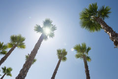 Sun shines through the palm trees Stock Images