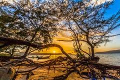 The sun shines through the pine tree Stock Image