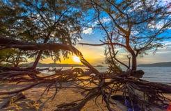 The sun shines through the pine tree Royalty Free Stock Photos