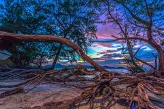 The sun shines through the pine tree Stock Photos