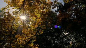 Sun shines rays through tree leaves stock footage