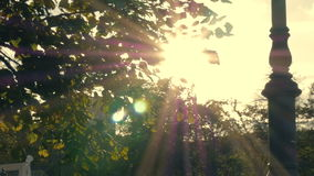 Sun shines rays through tree leaves stock footage