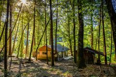 Sun shines through tall trees surrounding a small cabin in the forest next to the Rogue River in Oregon. Sun shines through tall trees surrounding a small cabin royalty free stock image