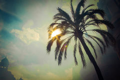 Sun shines throgh palm leafs Royalty Free Stock Photo