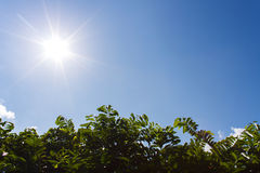 sun shines with tree and blue sky Stock Photography