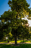 The sun shines through a tree on Federal Hill, Baltimore Stock Photography
