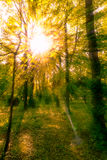 Sun shines through the tree leaves in autumn Stock Images
