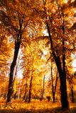 Sun shines through the tree leaves in autumn Stock Image
