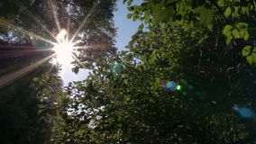 Sun shines through tree leaves stock video footage