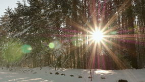 Sun shines through the trees.  stock footage
