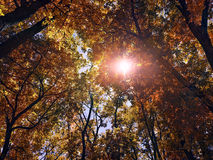 Sun shines through the trees in the autumn forest Stock Photography