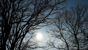 Sun shines through trees on blue sky background. Light goes through branches with no leaves stock video