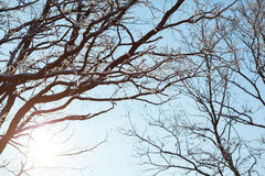 Sun shines through trees on blue sky background. Royalty Free Stock Images