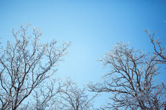 Sun shines through trees on blue sky background. Royalty Free Stock Image