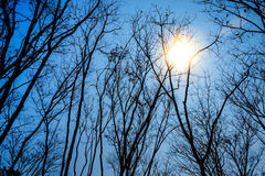 Sun shines through trees Royalty Free Stock Image