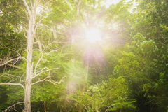 Natural. The sun shines through the trees and leaf green Royalty Free Stock Images