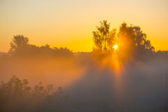 Sun shines through the trees in the mist at dawn Stock Photos