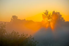 Sun shines through the trees in the mist at dawn Stock Image