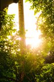 Sun shines through the trees royalty free stock photography