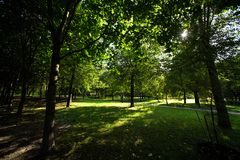 The sun shines through the trees. In the park Stock Image