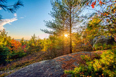 Sun Shines Through Trees in a Rocky Forest Royalty Free Stock Photos