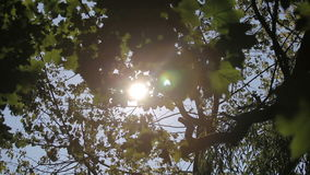 The sun shines through the trees stock video