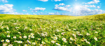 The sun shines on a wide meadow with flowers Royalty Free Stock Photo