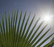 Sun shing through palm fronds. Stock Images
