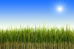 Sun shining Stock Images