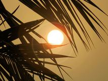 The Sun. Sun is shining Royalty Free Stock Images