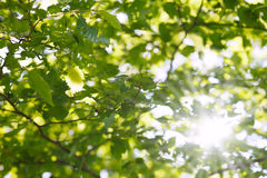Sun shining against leaves Stock Images