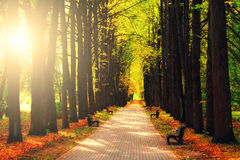 Sun shining on alley. In autumn park Royalty Free Stock Images