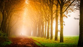 Sun shining along tree lined road in countryside stock photo