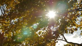 The sun shining through autumn maple leaves. The sun shining through autumn maple leaves, slow motion stock video footage