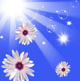 Sun shining beams Stock Photos