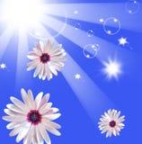Sun shining beams Stock Photos
