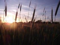 Sun is shining. Beautiful sunset on ukrainian field stock photos