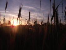 Sun is shining. Beautiful sunset on ukrainian field stock image