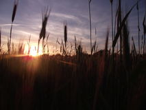 Sun is shining Stock Image