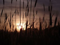 Sun is shining. Beautiful sunset on ukrainian field royalty free stock photography