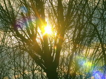 Sun is shining beautifully through tree branches Stock Photography
