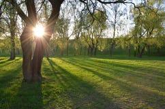 The sun is shining through big tree Stock Photo