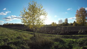 Sun shining with birch trees in autumn, time lapse 4K. Sun shining on a field with birch trees in the autumn, time lapse 4K stock video footage