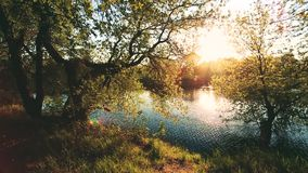 Sun shining through branch and foliage of tree near river or lake at spring sunset or sunrise. Summer landscape in sunny. Day. Nobody. Deciduous Forest Nature stock video footage