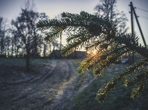 Sun Shining Through the Branch in Morning - vintage look edit. Sun Beam Shining Through the Branch in Early Winter Morning with Snow on Ground, Sunrise - vintage Stock Image
